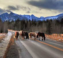Horses on the road (HDR) by zumi