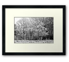 Frost on Trees in Black and White Framed Print