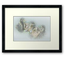 Ducklings at Wycoller Framed Print