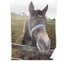 kingswood/surrey/horse in field -(010212)- digital photo Poster