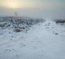 Fog Walking by Andy Freer