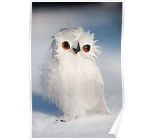 Owl in the Snow Poster