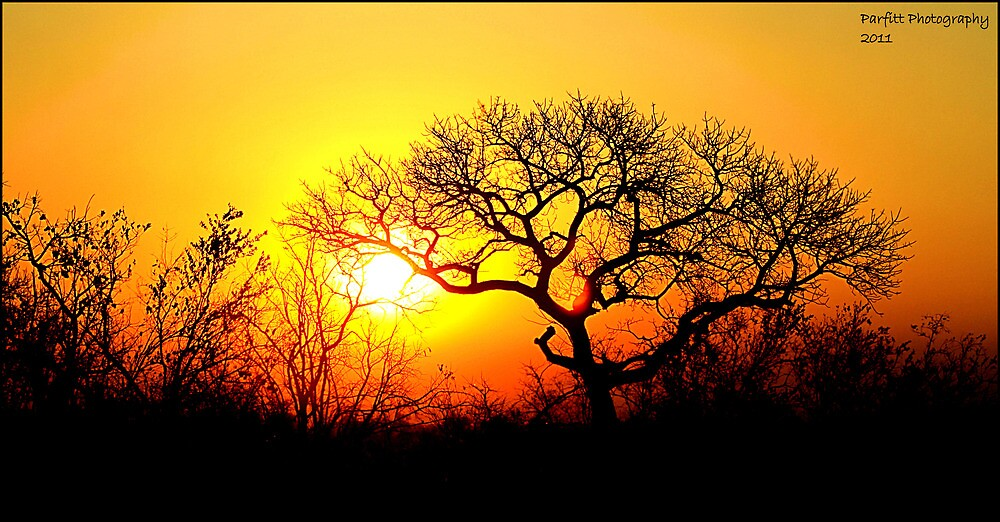 Kruger Park Sunset by Greg Parfitt
