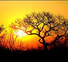 Kruger Park Sunset by Greg Parfitt