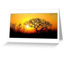 Kruger Park Sunset Greeting Card