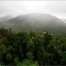 Mamu Rainforest Walk 1 by Chris Cohen