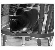 watcher cat Poster