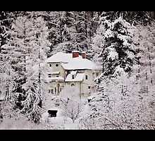 Real Winter by Mojca Savicki