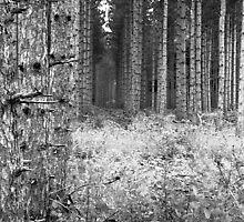 wood#6 by Joe  LaFata