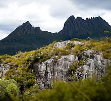 Cradle Mountain with rock and heath foreground by aslanimages