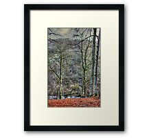 When all the leaves are gone Framed Print