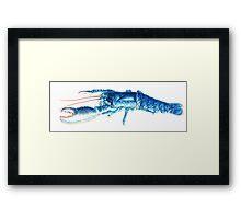 Common Lobster, Homarus gammarus watercolour Framed Print