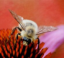 Just Bumbling Through by Lois  Bryan
