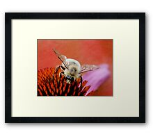 Just Bumbling Through Framed Print