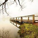 Daylesford mist by Victor Pugatschew