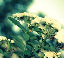 Baby Breath 1 by Jamie McCall