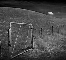 On The Other Side Of The Fence by Laurie Search
