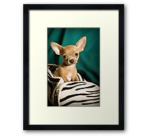 Meet George Framed Print