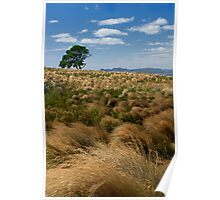 Solitary tree - The Nut, Tasmania Poster