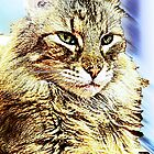 Maine Coon by Terri Chandler