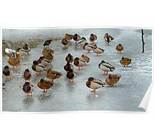 frozen ducks Poster
