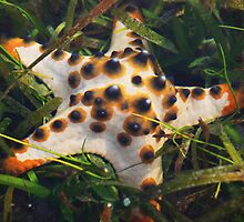 starfish 2 by Michael Brewer