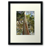 To the Sky - Noosa Gum, Queensland, Australia Framed Print