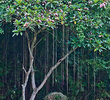 Tropical garden and flowering tree at Pura Taman Ayun near Mengwi in Bali, Indonesia by Michael Brewer