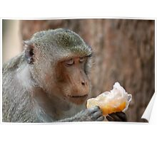 Monkey Savouring His Piece of Fruit Poster