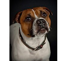 Gizmo (Seenworstaff Stand By Me) Photographic Print
