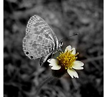 Butter-fly.. Photographic Print