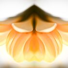 Flora ~ Gerbera mirror 5094 by heidiannemorris