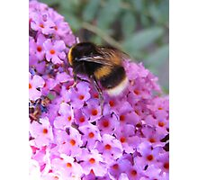 Busy Buzzy Bee Photographic Print