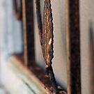 Rusty Frame by Leon Heyns