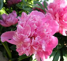 Pink Visions of Peony by GoldFox9478