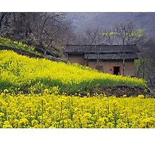 Yellow Flowers and Farmhouse, China Photographic Print