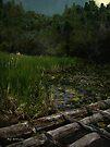 Crossing the Bog by RC deWinter