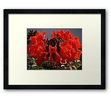 Tropical Beauty - Belleza Tropical Framed Print