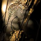 Last Light by Leon Heyns