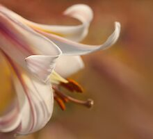 Easter Morning Will Come by Marilyn Cornwell