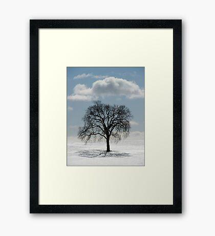 Backlit Tree  Framed Print
