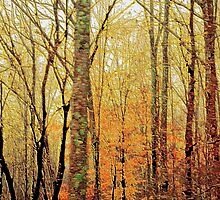 *Autumn Forest Textures* by DeeZ (D L Honeycutt)