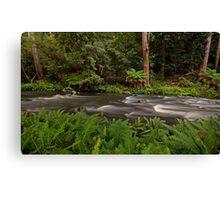 Manning River, Barrinton Tops Canvas Print