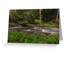 Manning River, Barrinton Tops Greeting Card