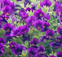 Purple Miniature Petunia Blossoms  by Sandra Foster