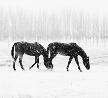 New Zealand — All Black and white by meredithnz