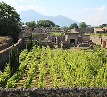The Vineyards of Pompeii by hummingbirds