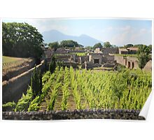 The Vineyards of Pompeii Poster