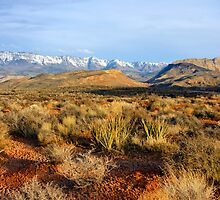 Mojave Morning by Harry Oldmeadow