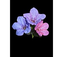 Mary and Joseph Spring Flowers Photographic Print